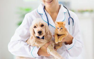 Conheça mais sobre as especialidades do Hospital Vet Plus